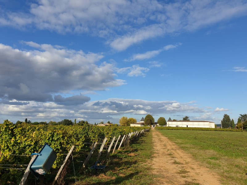 Le journal des vendanges 2019